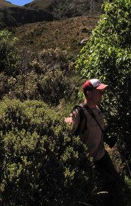 Pieter, plant ID ,Temple basin