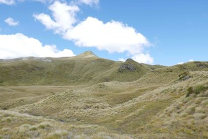 Tussock fields below Mt. Burns